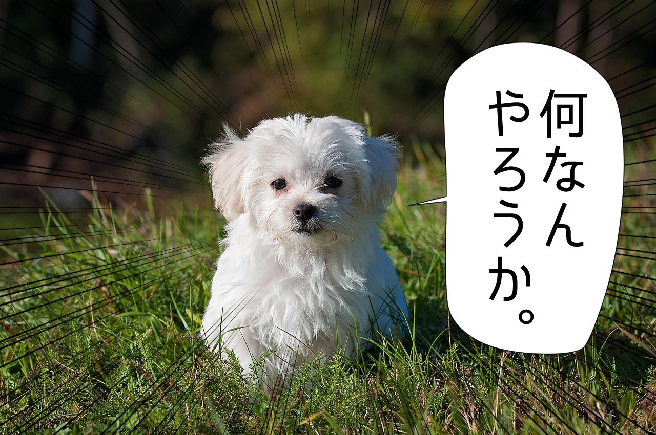 何なんやろうかという犬